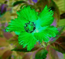 Winter Flower; Digital Art by POETRY508
