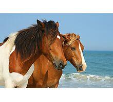 Assateague Horses Photographic Print
