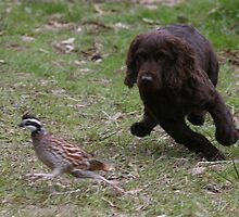Trudy and the Quail by Pamela Kadlec