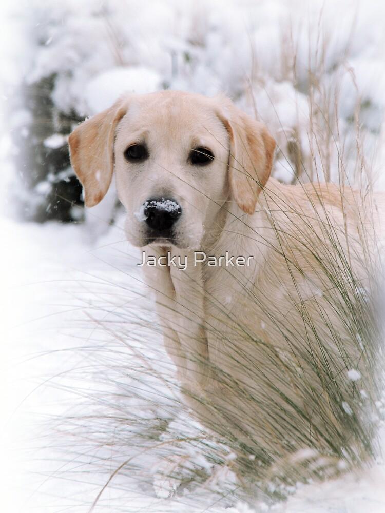 Snow Daisy by Jacky Parker