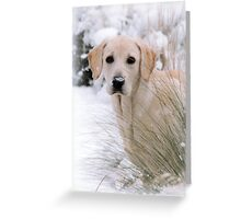 Snow Daisy Greeting Card