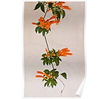 strand of flowers Poster