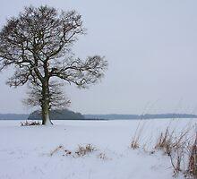 Saffron Walden Winter by Dave Law