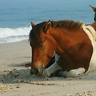 Horse On The Beach by Jesse Simmers