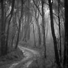 Don't Go Into The Woods Today. by Ben Loveday