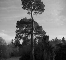 Sidelit Tree at Haddo House by Gordon Brebner