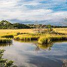 Grasses in Wetland Marsh by dbvirago