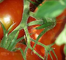 Beautiful Red Tomatoes! by graphicdoodles