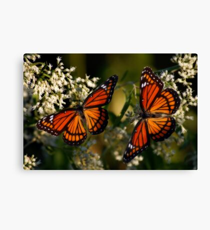 Pair of Viceroys Canvas Print