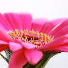 Pink Flower by Gordon Brebner
