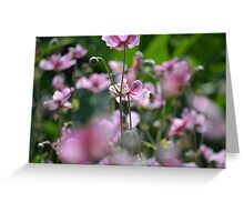 Beautiful pink blossoms  Greeting Card