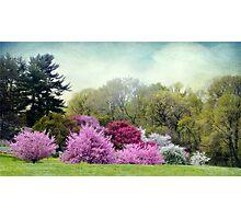 Cherry Orchard Photographic Print