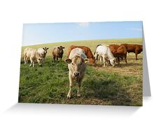 The Cow Police Greeting Card