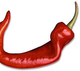 chilli by sarah-and-ash