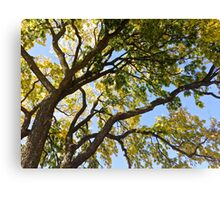 Branches of a Tree Canvas Print