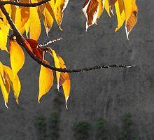 Autumn by SilviWockeez