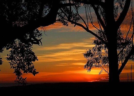 """Coloured Dawn"" by debsphotos"