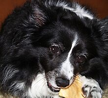 Brie with Rawhide Chip by Memaa