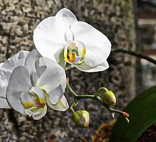Painted Orchid by Harleycowgirl