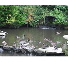 waterfall and birds Photographic Print