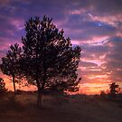 Trees in Sunset by ienemien