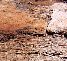 Rotting Palm by Bindee