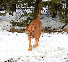 Nice Doggy by HALIFAXPHOTO
