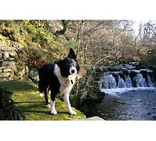 Indy at Nant-Y-Coed Photographic Print