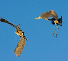 Aerial Acrobatics by Marvin Collins