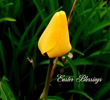 Easter Blessings by WildThingPhotos