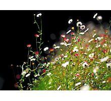 littlepettle Photographic Print