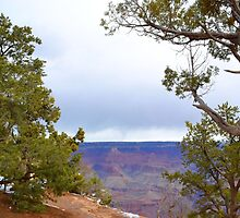 Grand Canyon 6 by Leona Bessey
