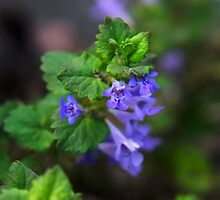 Purple Ivy Flowers by Christina Rollo