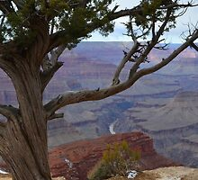 Grand Canyon 8 by Leona Bessey