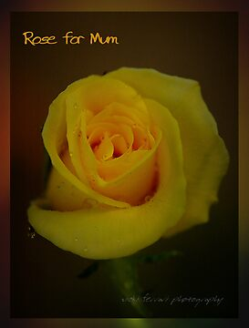 Rose For Mum © Vicki Ferrari by Vicki Ferrari