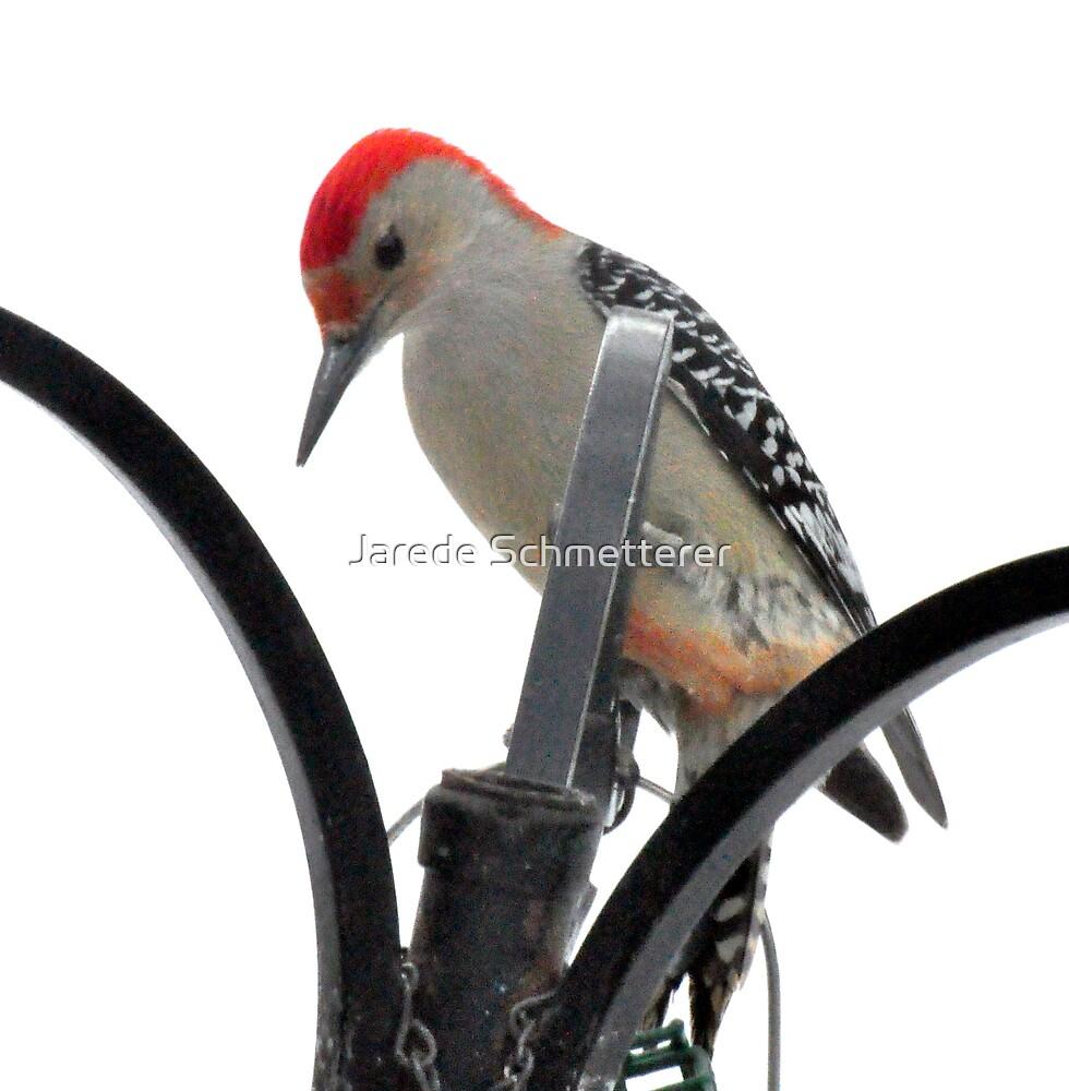 Redheaded Woodpecker by Jarede Schmetterer