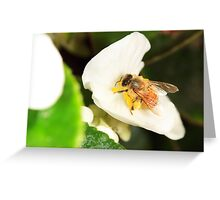 Bee on white Greeting Card