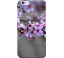 Cherry Blossoms of Spring iPhone Case/Skin