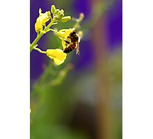 Hungry Bee Photographic Print