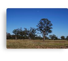 lonely trees Canvas Print