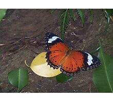 Fly,Butterfly,Fly Photographic Print