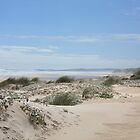 Dunes at Yeagarup Beach, Nr Pemberton, Western Australia by Elaine Teague