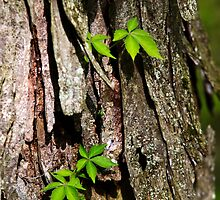 Vine on Bark Abstract by Christina Rollo