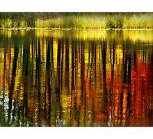 Waterline by Dave  Higgins