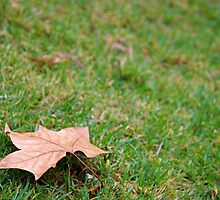 lonely autumn leaf by Martin Pot