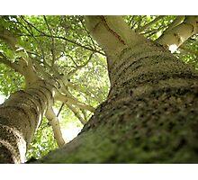 Reaching upwards Photographic Print