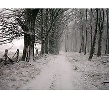 Thieves Wood Photographic Print