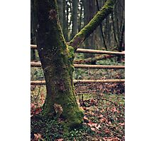 Fence in the Forest Photographic Print