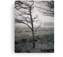 Thieves Wood IV Canvas Print