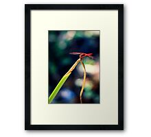 Dragonfly Greeting Framed Print
